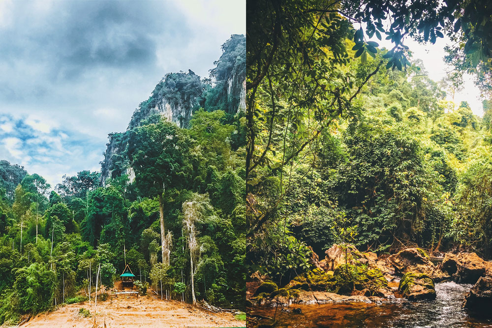 Khao Sok National Park vs Khao Yai National Park