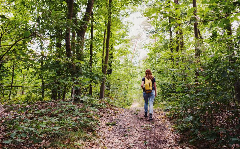 Wandelen in de Peelse Heide