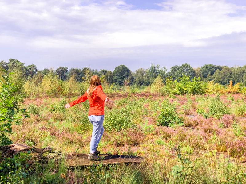 Wandelen Noord Brabant Peelse Heide