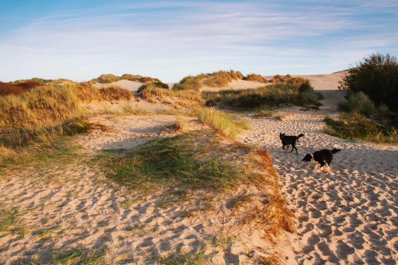 Rabjerg Mill Denemarken met honden