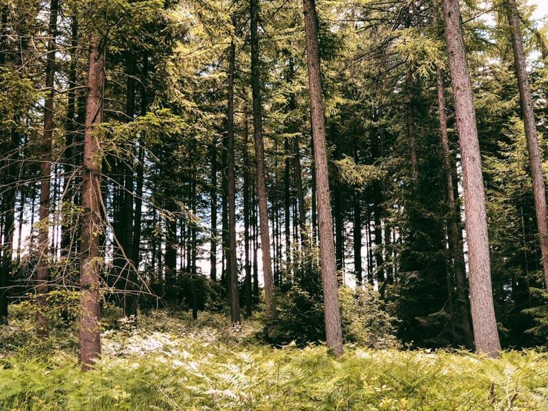 Rendeux Ardennen wandelen
