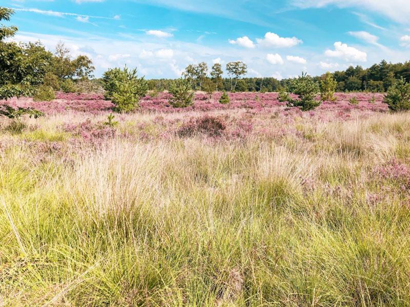 Heidewandeling Nederland Rucphense Heide