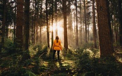 Wandelen in het Speulderbos met de dansende bomen