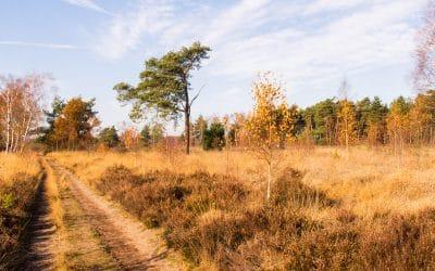 Wandeling Cartierheide in de Brabantse Kempen
