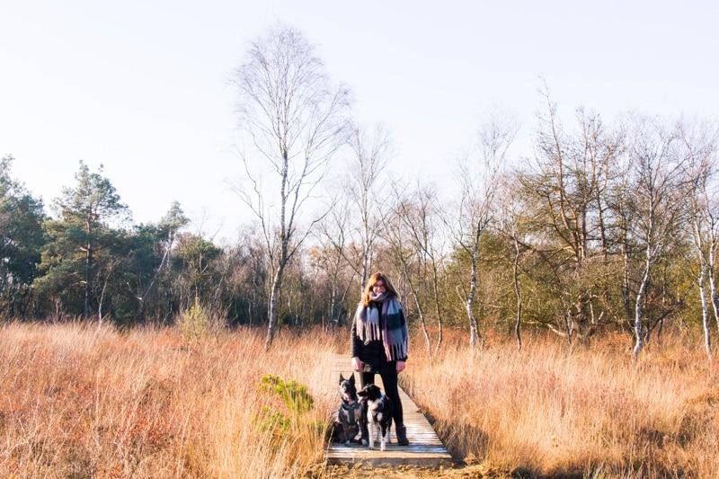 Wandeling Cartierheide met honden