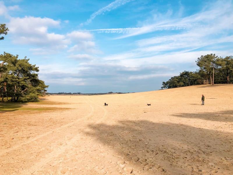 Wandelen Loonse en Drunense duinen