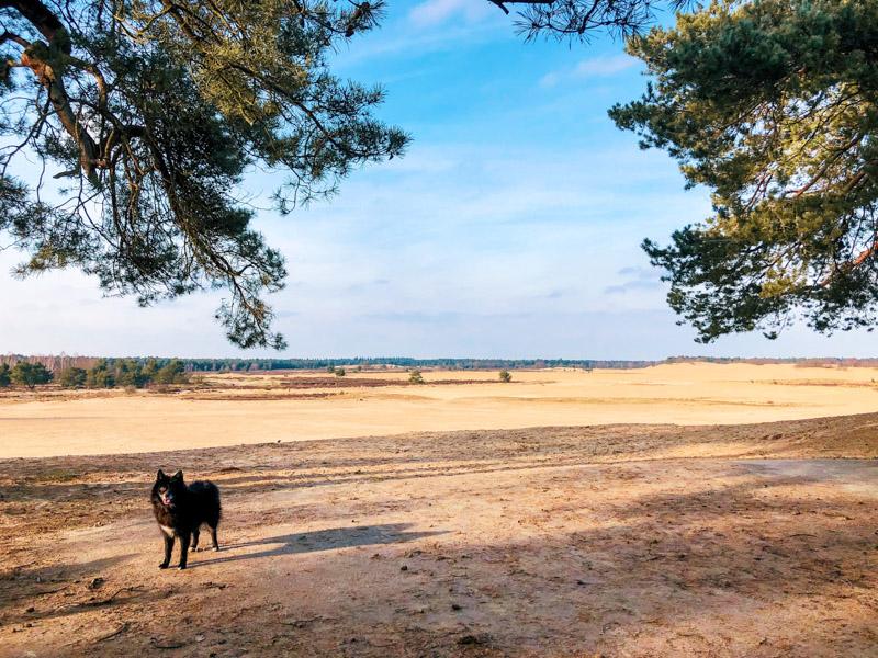 Wandelen met honden Loonse en Drunense duinen