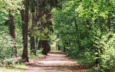 Wandelen door het Panbos, Houdringe en Beerschoten