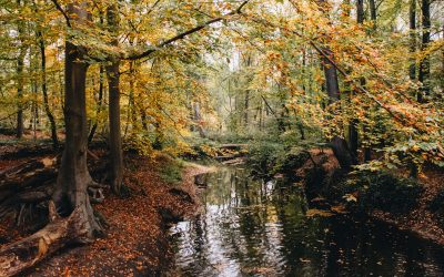 Wandelen in Winterswijk | de mooiste wandelgebieden
