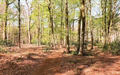 Wandelen Wouwse Plantage | wandelgebied in Brabant