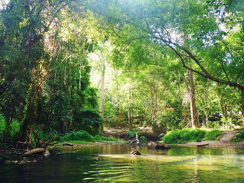 Zwemmen in de jungle van Thaiiland