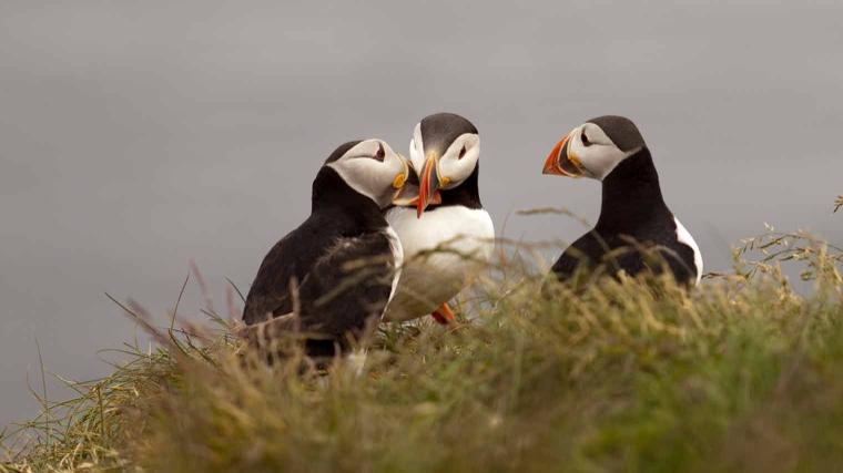 Faeröer eilanden, Faeröer, eilanden, eilandengroep, denmarken, papegaaiduikers, papegaaiduikers, bucket list, abc wishlist, wishlist,