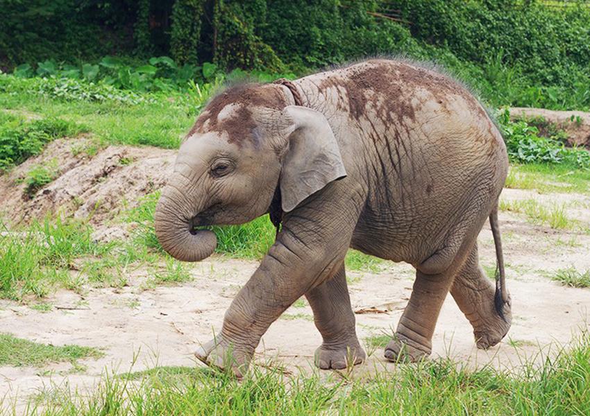 Elephant Retirement Park: een dag olifanten verzorgen