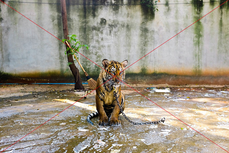 Welke dierenattracties je niet op je bucket list moet zetten