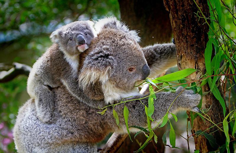 abc wishlist, wishlist abc, wishlist, bucket list, plekken die ik wil zien, australie,