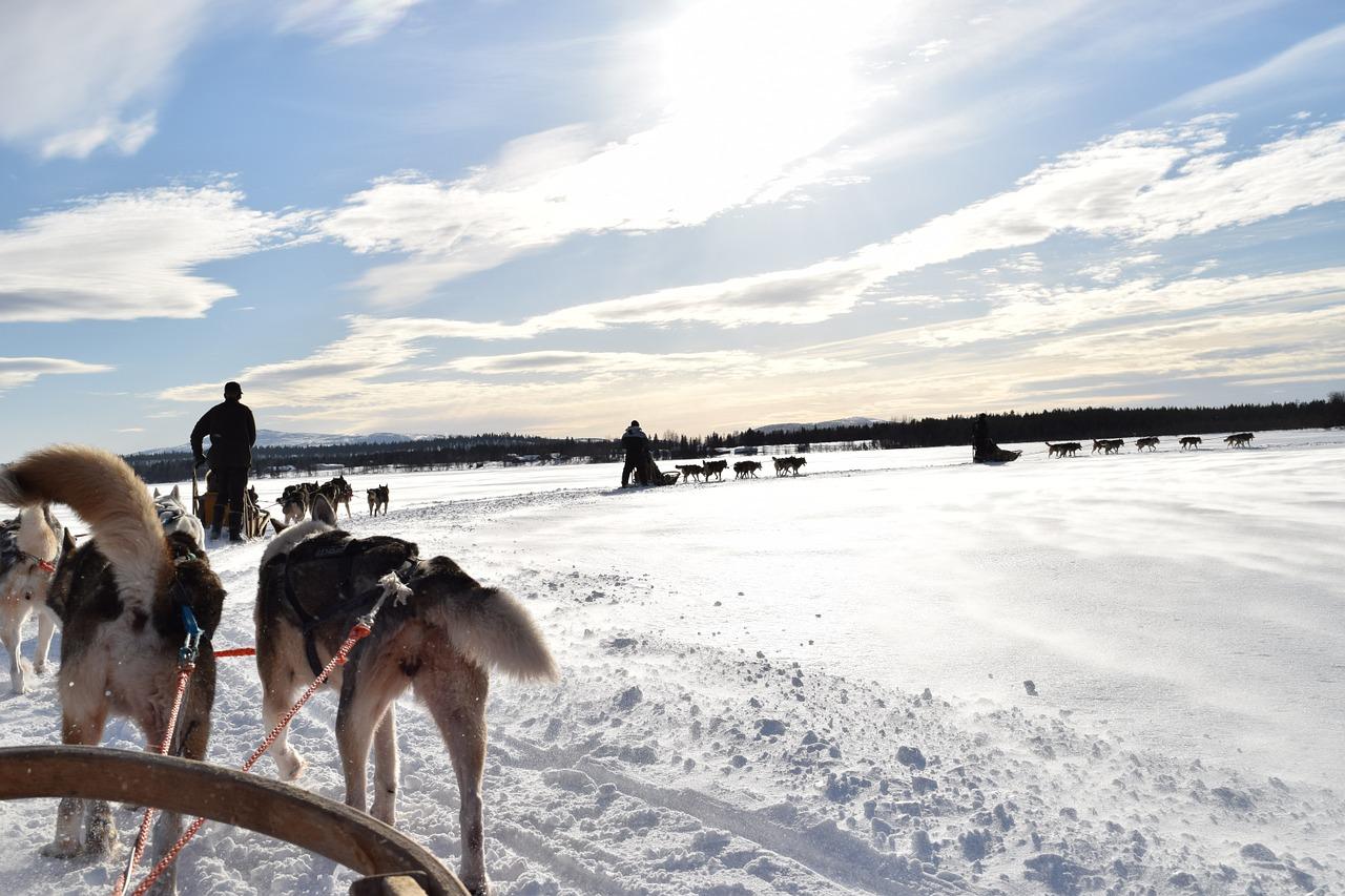 hondensleetocht, honden, huskey, snow, sneeuw, sleetocht, lapland, ijsland, tocht,