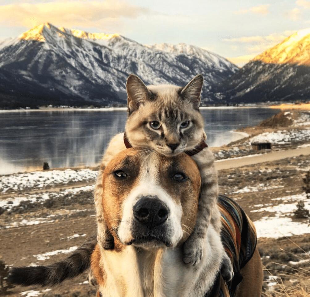 12 dieren die de wereld over reizen