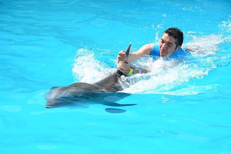 Welke dierenattracties je niet op je bucket list moet zetten, zwemmen met dolfijnen,