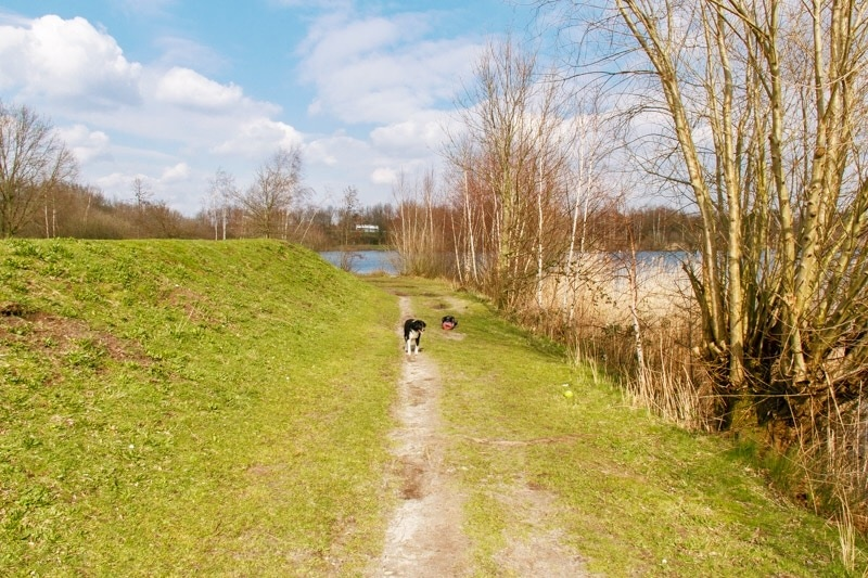 wandelen bij Galderse meren met honden